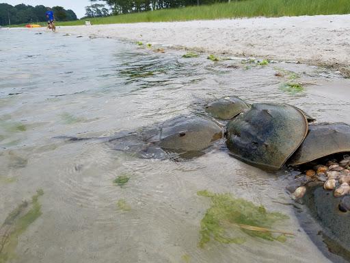 Nature Preserve «James Farm Ecological Preserve», reviews and photos, 30048 Cedar Neck Rd, Ocean View, DE 19970, USA