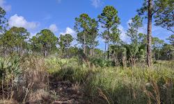 Atlantic Ridge Preserve State Park
