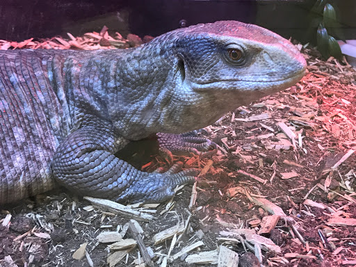 Reptile Store «Sierra Aquatics», reviews and photos, 295 Kietzke Ln, Reno, NV 89502, USA