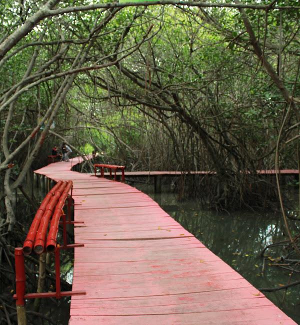 Jembatan Merah Hutan Mangrove