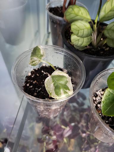 Jardinerie Rare Plant Care Canada Inc. à Moncton (NB) | LiveWay