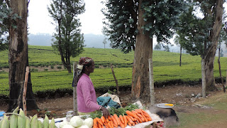 bangalore mysore coorg ooty tour package