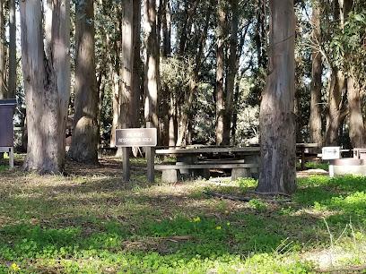Tree Removal in San Bruno, CA