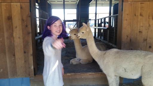 Farm «Painted Sky Alpaca Farm & Fiber Mill», reviews and photos, 95 Knight House Ln, Earleville, MD 21919, USA