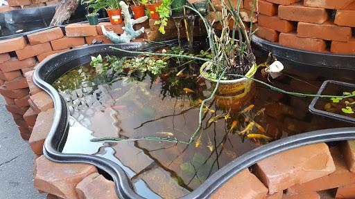 Pet Supply Store «Lotus Aquarium», reviews and photos, 14704 Hawthorne Blvd, Lawndale, CA 90260, USA