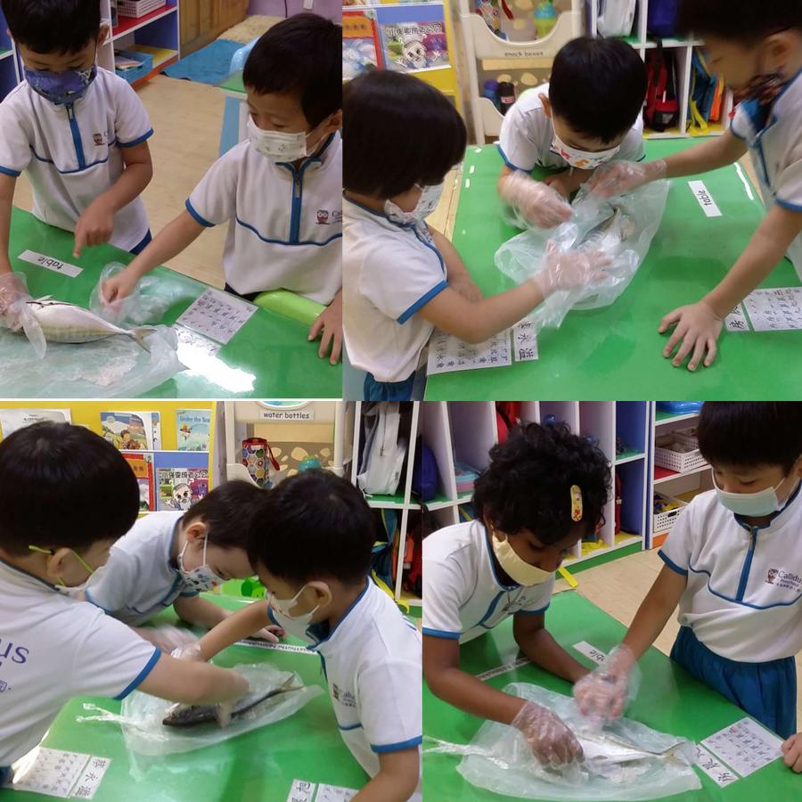 Callidus Preschool @ Bishan卡利德斯幼儿园