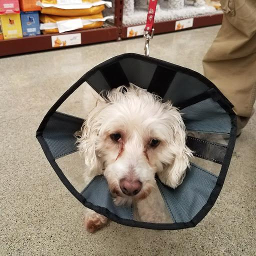 Pet Supply Store «Pet Food Express», reviews and photos, 631 Broadway, Millbrae, CA 94030, USA