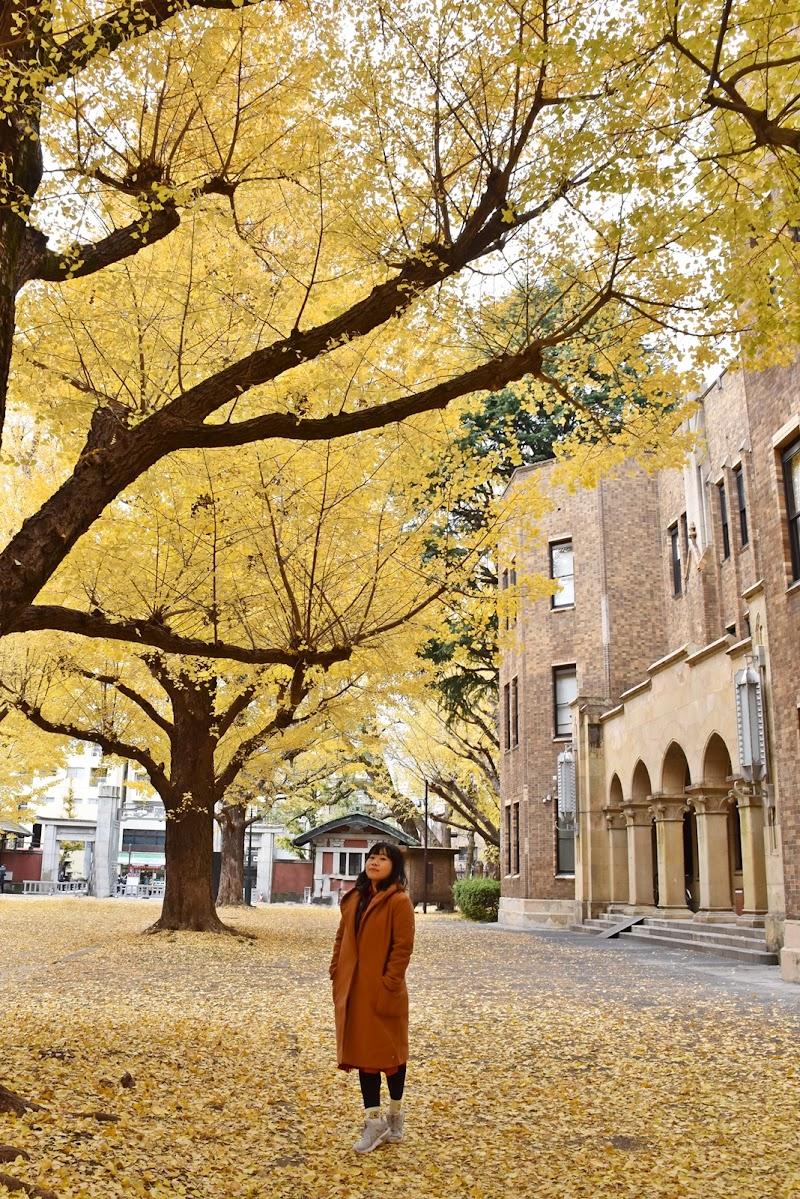 東大本郷銀杏並木