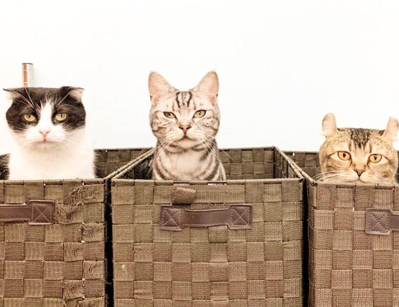 猫カフェ 小動物カフェ Moff animal cafe 水戸オーパ店