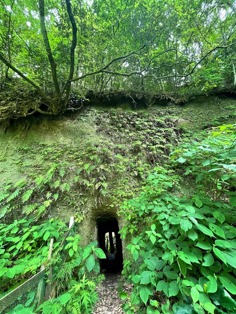 湿地植物園 (いちはらクオードの森)