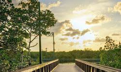 Riverwalk Boardwalk