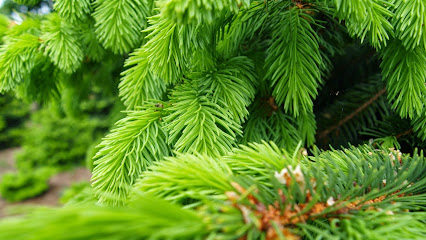 Christmas tree farm The Billingley Christmas Tree Farm