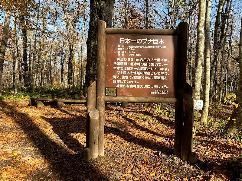 ニドムカムイ(森の神)