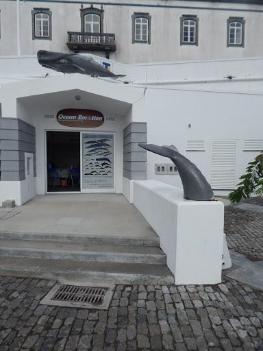 OceanEmotion | Whale Watching in the Azores, Terceira Island, 9700-154 Angra do Heroísmo, Portugal, Abadia, estado Azores