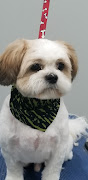 Business Reviews Aggregator: MaryAnne's Pampered Pooch