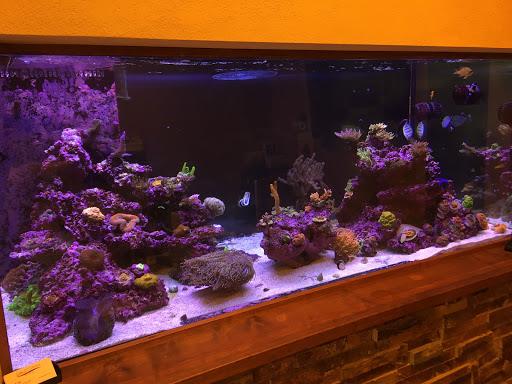 Pet Store «California Aquariums», reviews and photos, 6924 Canby Ave #113, Reseda, CA 91335, USA