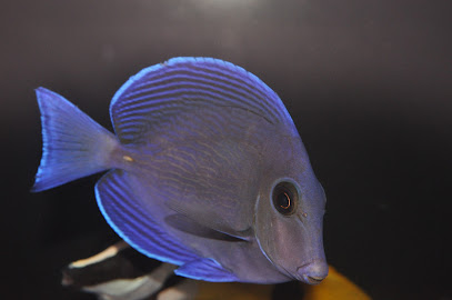 Saltwater Tropical Fish Store Near Me - MAPPinternational org