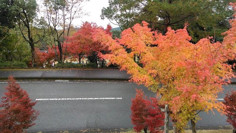 佐賀県立21世紀県民の森・総合案内センター ほおのき