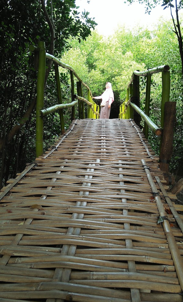 Hutan Mangrove Pantai Lestari Karangsong