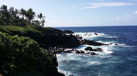 Tree Expert Hawaiian Beaches, HI