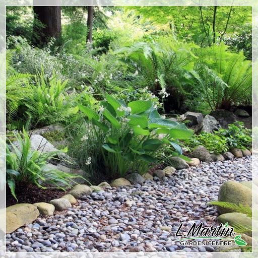 Jardinerie L. Martin Garden Centre à Kingston (ON)   LiveWay