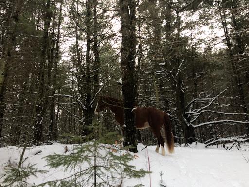 Équitation JJ Stables à Mirabel (Quebec)   CanaGuide