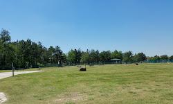 Gene Green Dog Park