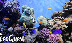 SeaQuest Utah