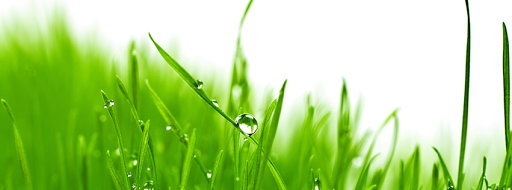 Lawn care service Forevergreen Canada Inc in Gatineau (Quebec) | LiveWay