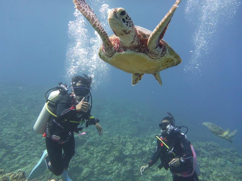 パドック|沖縄ダイビングライセンス|沖縄ダイビング免許
