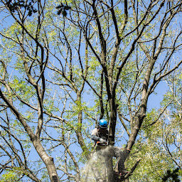 Best service of Tree Removal in Bedminster
