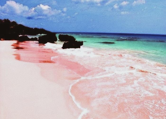 petsalon pinkbeach ペットサロン ピンクビーチ