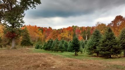Christmas tree farm Randalls Tree Farm