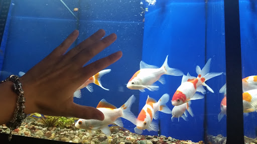 Shopping Mall Winchester Aquarium Pet Center Reviews And Photos 190 Costello Dr Winchester