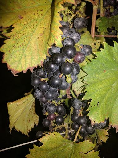 Winery «Basignani Winery», reviews and photos, 15722 Falls Rd, Sparks Glencoe, MD 21152, USA