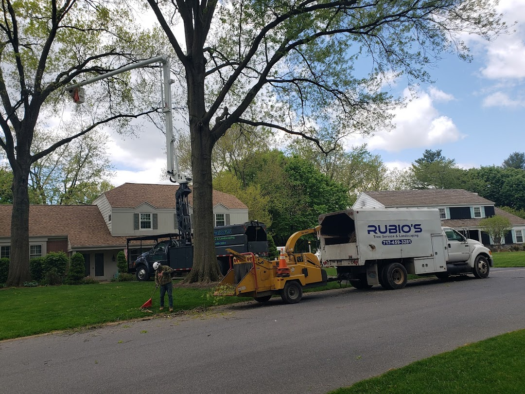 Rubios Tree Services Landscaping In The City Lancaster