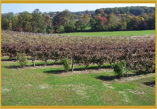 Winery «Fiore Winery», reviews and photos, 3026 Whiteford Rd, Pylesville, MD 21132, USA