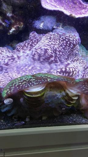 Pet Supply Store Seascape Aquarium Pet Center Reviews And Photos 2162 Gulf Gate