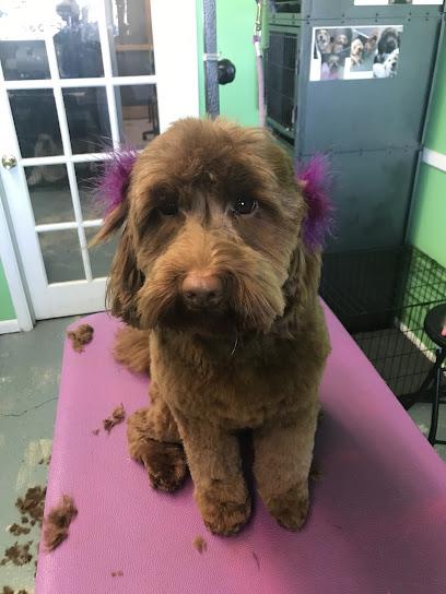 Pet groomer A Leg Up Dog Grooming