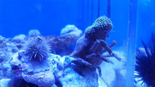 Tropical Fish Store «Top Shelf Aquatics», reviews and photos, 7250 Aloma Ave #102, Winter Park, FL 32792, USA