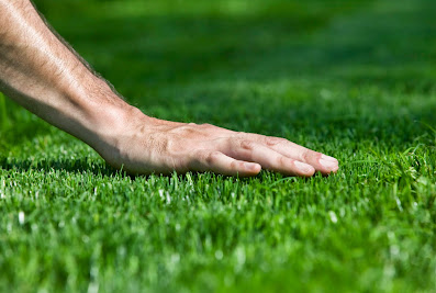 Scapegoat Landscaping – Lawn Maintenance Augusta GA Lawn Services & Landscape Mulch & Lawn Care