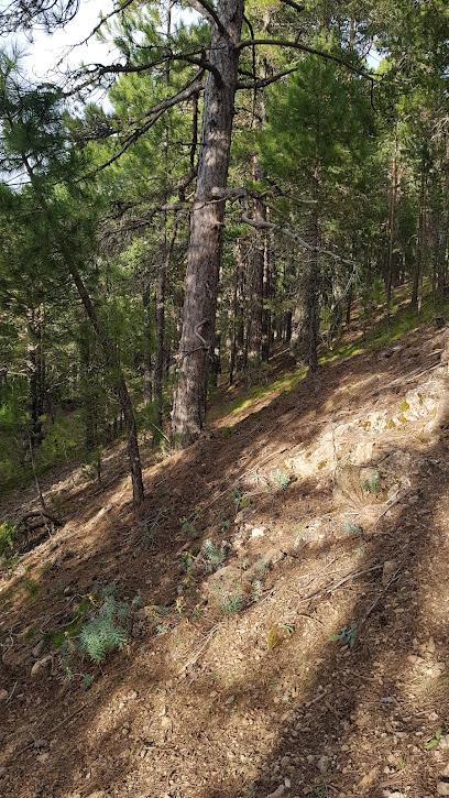 Fuente La Miel. Camarena de la Sierra