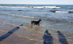 Walton Rocks Beach / Dog Park