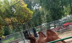 Wild Kingdom Train Zoo