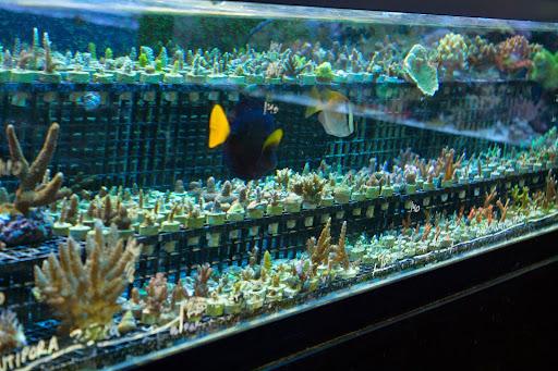 Pet Store «Tropics», reviews and photos, 799 Foothill Blvd, San Luis Obispo, CA 93405, USA