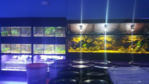 Tropical Fish Store «Aquarium Center», reviews and photos, 1468 Blackwood Clementon Rd, Clementon, NJ 08021, USA