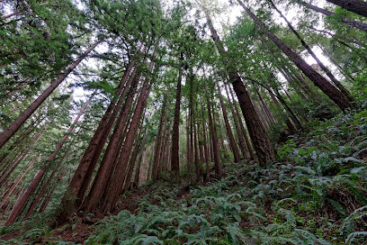 Purisima Creek Redwoods Preserve