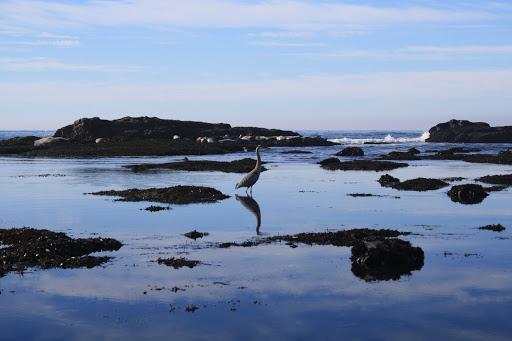 Nature Preserve «Fitzgerald Marine Reserve», reviews and photos, 200 Nevada Ave, Moss Beach, CA 94038, USA
