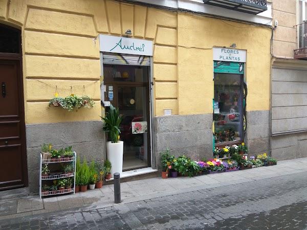 Andrés Flores y Plantas