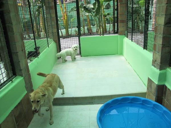 Residencia Canina Elvira Libert-Mimos